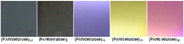 Iridescent colors seen in spin-coated LBL films of cellulose